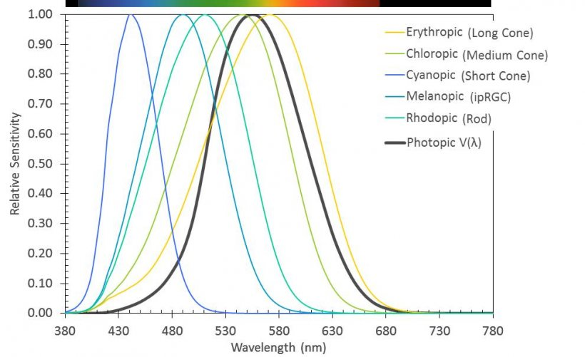 Figure 3. Spectral sensitivity (action spectra) of the five known human photoreceptors, along with Vλ, the photopic response curve used to define and quantify lumen output from a light source. Data from CIE TN 003:2015.