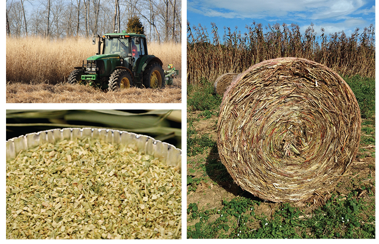 Top left: Switchgrass harvest. Top right: Switchgrass, baled. Bottom left: Chopped and ground switchgrass. Photos courtesy of Oak Ridge National Laboratory.
