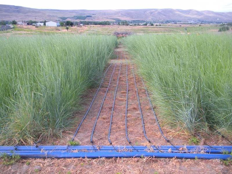 Soil samples were taken at this field site in Prosser, WA. All soil samples were collected in three field replicates within a 0-to 20-cm depth from the ground. For each of the three field blocks, researchers collected three homogeneous replicates.