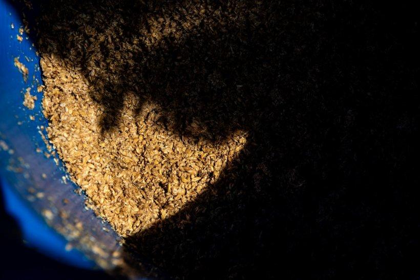 a barell of spent grain