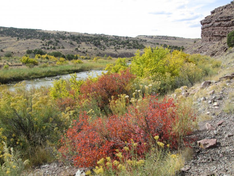Invasive species management on ULP lease tracts along the banks of Colorado's Dolores River has restored native plant species, improved riparian habitat, and created a healthier ecosystem.