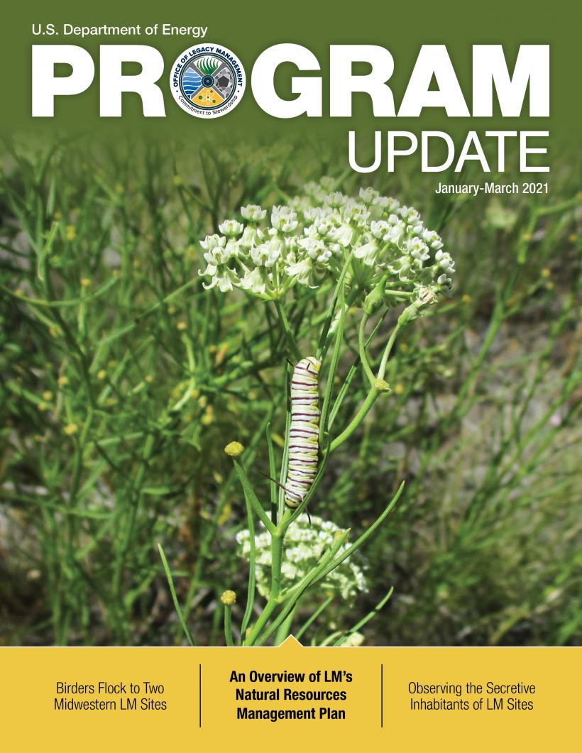 LM Program Update 2021 Q1 Cover
