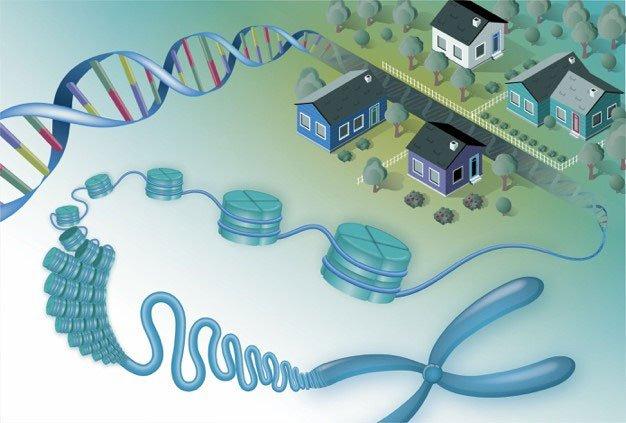 With new research, genomic neighborhoods help scientists understand functionally related genes in eukaryotes.