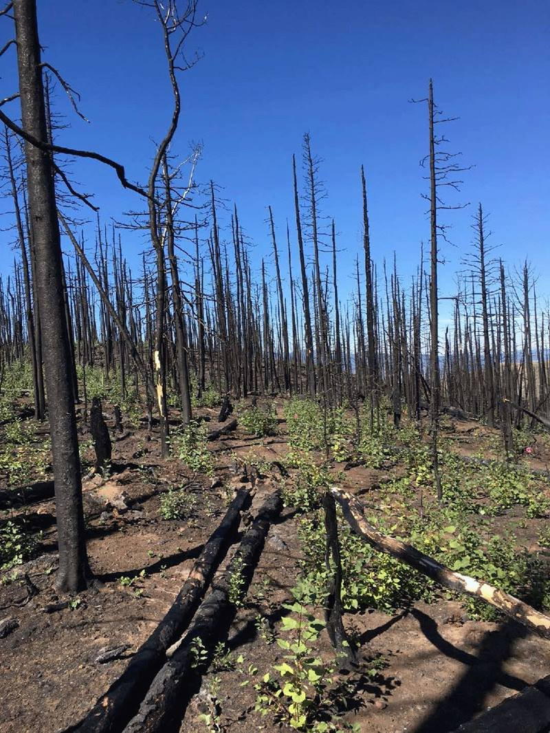Fires—including deliberate fires for land management—affect the entire microbiome of aspen groves.