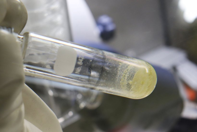 A view of the extracted thorium-229, a rare medical isotope that TerraPower is using to generate Actinium-225 for next-generation cancer research and treatment.