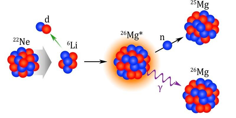 An isotope of Neon (22Ne) captures an alpha-particle (α) to create Magnesium-26 (26Mg) in an excited state. The excited Magnesium-26 then releases energy by emitting a gamma ray (γ), leading to Magnesium-26 or a neutron, leading to Magnesium-25.