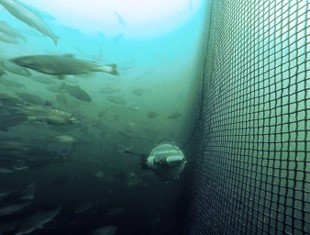Improved fish protection in the ocean.