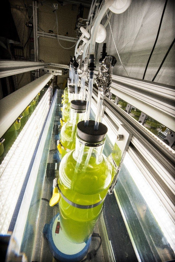 NREL's algae cultivator—pictured here—can be programmed to model a location's climate.