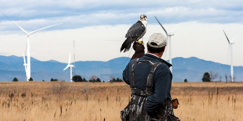 Daytime photo of a wind farm with a man standing in the foreground and a hawk perched on this hand.