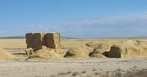 Storing biomass in a loose pile of chopped material, a stack of large square bales, and in loaves.