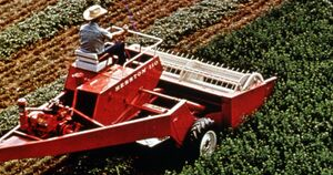 Harvesting alfalfa in Minnesota.