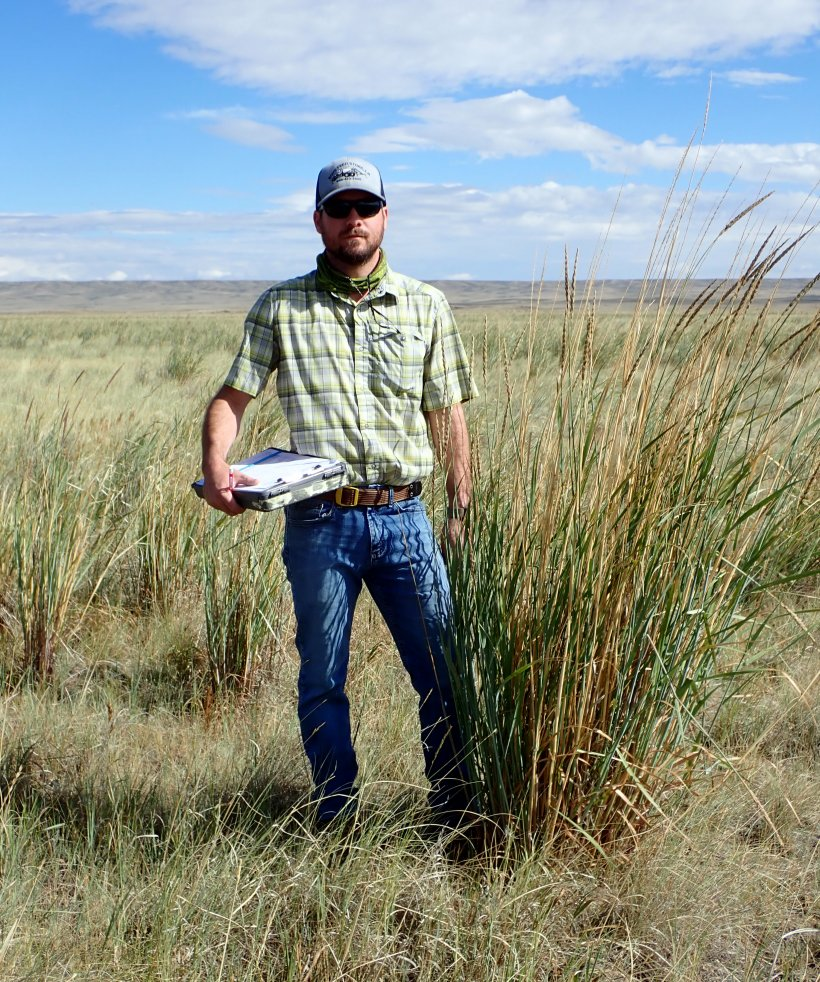 David Holbrook, lead ecologist for the LM Strategic Partner (LMSP), standing next to basin wildrye in one of the regenerative grazing study plots.