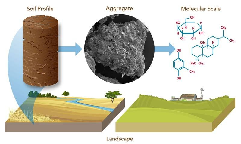 Soil texture influences the local microbiome. Researchers used scanning electron microscopic images of soil particles and aggregates to understand the influence of biofuel crops and site selection on soil organic carbon chemistry.