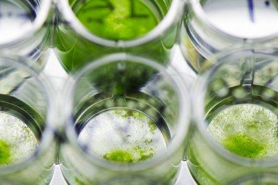 Algae Technology Educational Consortium