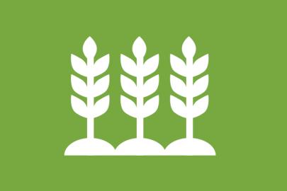 Biomass Feedstock