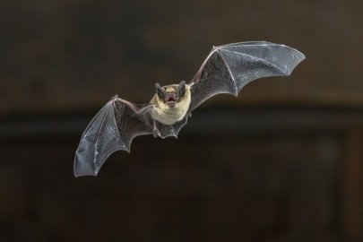 New Tool Protects Bats While Increasing Energy Production