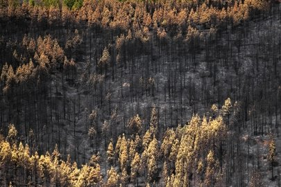 U.S. Department of Energy Announces $2.25 Million Investment in Wildfire Technologies