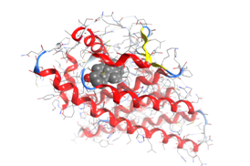 Representation of a chemical compound (gray spheres) connecting with a targeted protein (red ribbons).