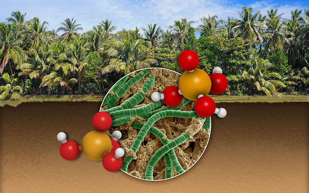 Optimal Foraging: How Soil Microbes Adapt to Nutrient Constraints