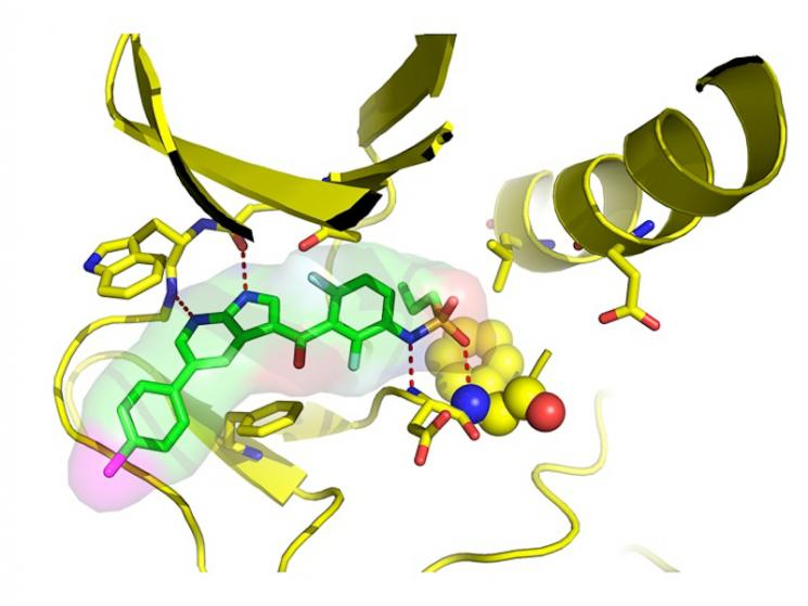 The new anti-cancer drug, vemurafenib, is the green honeycomb structure at middle left. Four dotted red lines show where it attaches to a target area in the mutated enzyme, disabling it from promoting the growth of tumors. | Image courtesy of Plexxikon Inc.