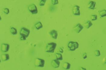 These tiny green crystals, measuring just millionths of a meter, preserve the molecular structure and activity of Photosystem II, which carries out the oxygen-releasing process in photosynthesis. The chlorophyll-containing crystals, which have a boxlike structure, were studied at room temperature using ultrashort X-ray pulses at SLAC's Linac Coherent Light Source X-ray laser. The image was taken with a light microscope. | Photo by Jan Kern, Lawrence Berkeley National Laboratory.
