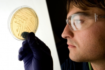 A researcher examines a strain of the fermentation microorganism Zymomonas mobilis on a culture plate. NREL has genetically engineered and patented its own strains of Zymomonas mobilis to more effectively ferment the multiple sugars found in biomass as part of the cellulosic ethanol-to-renewable fuel conversion process. | Photo by Dennis Schroeder, NREL.