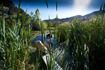 National Renewable Energy Laboratory researcher Lee Elliott collects samples of algae at a creek in Golden, Colorado. | Photo by Dennis Schroeder, National Renewable Energy Laboratory