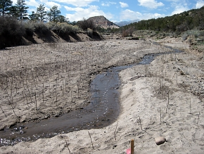 Nearly 10,000 willows were planted to stabilize the stream banks in a canyon damaged by floods.