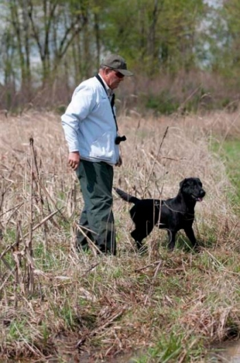 A black Lab awaits his handler's signal to retrieve a duck during field trials in late March in the West Kentucky Wildlife Management Area.