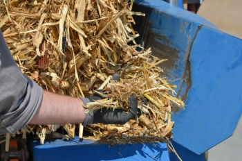 Corn plant's stalks, husks, cobs, and leaves, as a plentiful and reliable feedstock for producing bioenergy. | Courtesy of Abengoa