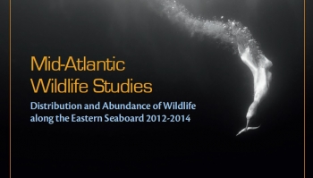 Innovative Study Helps Offshore Wind Developers Protect Wildlife
