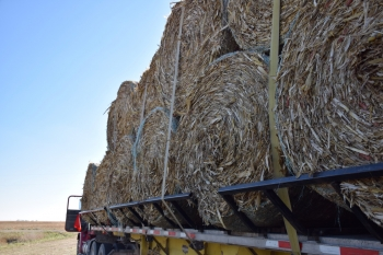Farmers bale the corn stover into round (pictured here) or square bales and then transport them to the biorefinery.