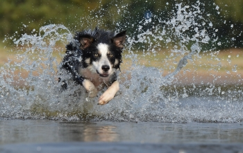 Prepare to keep yourself--and your pets--cool, healthy, and comfortable during extreme heat. | FEMA News Photo