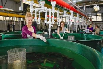 Researchers raising/taking care of fish at PNNL Aquatics Research Laboratory. Photo Courtesy: PNNL