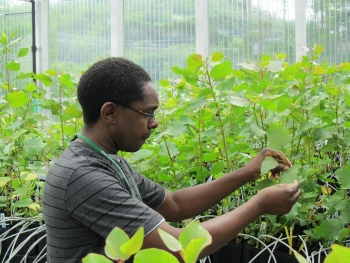 """On what led him to a career in science, Wellington Muchero says, """"As soon as I got a part-time job in a plant molecular biology lab as a college student, I realized there was no turning back."""" 