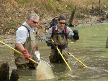 Oak Ridge scientists Kelly Roy, left, and Trent Jett collect fish samples in 2011 to supportresearch on the impacts of the treatment in Tims Branch, a small stream at the SavannahRiver Site.
