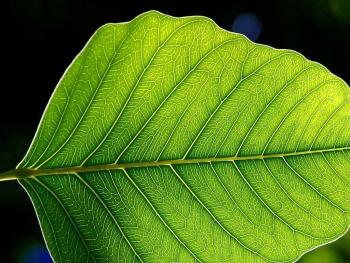 Plants capture CO2 and convert it into sugars that store energy. | Public Domain photo.