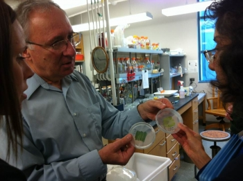 Tasios Melis (center) shows plates with tla3 algae and its parent strain to Katie Randolph (left) and Sunita Satyapal during a site visit to his lab at the University of California, Berkeley.