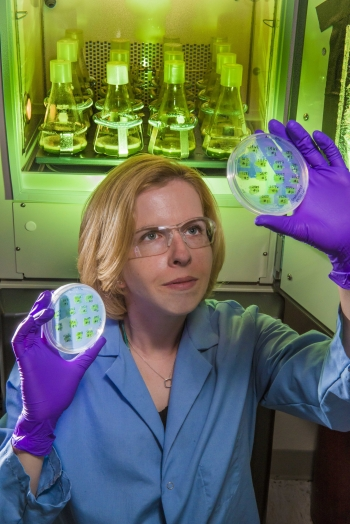 Engineer studies modification of algae for biofuel production. | Photo courtesy of Sandia National Laboratories