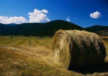 The Energy Department's Bioenergy Technologies Office engages with the U.S. Department of Agriculture on many projects, including guidance on the proper removal of corn stover (non-edible corn husks, stalks, and leaves) from the field when it is used for cellulosic ethanol and other advanced biofuel production. A corn stover bale is pictured here.