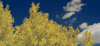 Don't let those bright autumn leaves and clear fall sky fool you—cold weather is just around the corner. Get your home ready for the chill ahead of schedule. <em>Photo by David Parsons, NREL 6317419</em>