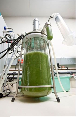 """A $20 million Recovery Act award will help Solazyme take production from tens of thousands of gallons a year of its algae """"drop-in"""" oil to an annual production capacity of over half a million gallons. 