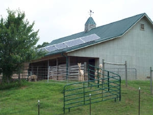 Alpacas stand outside a solar powered barn on the property of Larry and Cathi Dietsch | Photo courtesy of Larry Dietsch