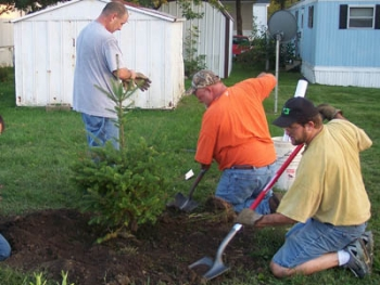 Volunteers from the Waverly Trees Forever group are planting windbreak trees on the north side of the mobile home court. Waverly experienced record flooding in 2008.   Photo Courtesy of Trees Forever