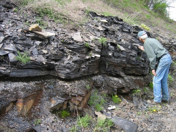Geologist examining the base of the Marcellus Shale at an outcrop near Bedford, PA.