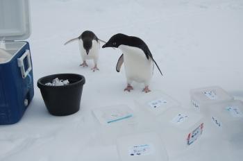 Penguins, Plankton, and Argonne's Advanced Photon Source