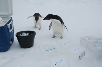 Penguins, Plankton, and Argonne's Advanced Photon Source