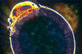 Biofilm for Carbon Capture