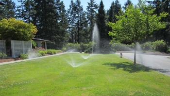 A residential lawn with several sprinklers spreading water across the green grass. One sprinkler is broken and shooting water straight up into the air.