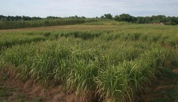 The collaboration between FDC, PGH, and others helped create a new market for energy crops, like switchgrass in Virginia.